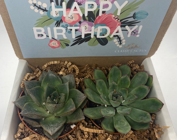 Succulent Gift Box - Floral Happy Birthday - 2 Large plants (3 inch plant)