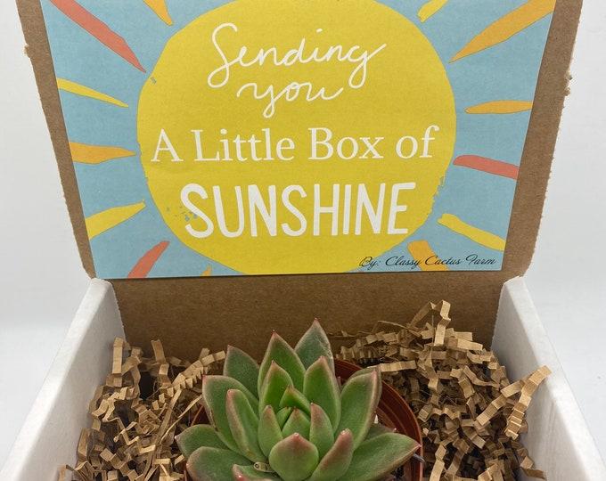 CUSTOM ORDER  11 Succulent Gift Box -  (3 inch plant)