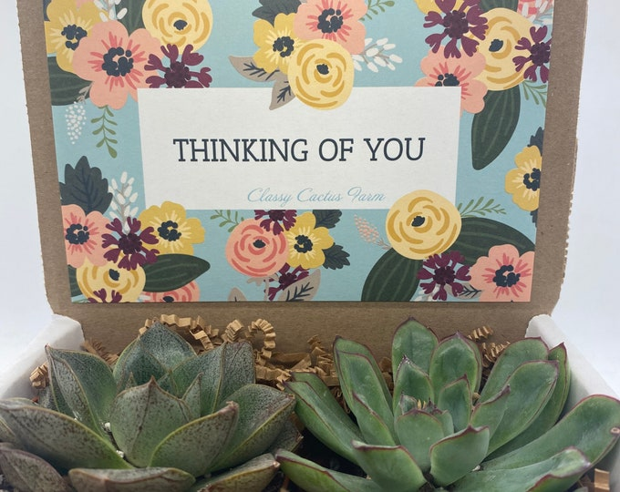 Succulent Gift Box - Thinking of You - 2 Large plants (3 inch plant)