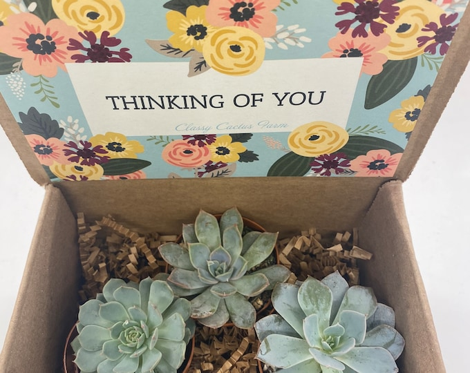 Succulent Gift Box - Happy Mother's Day floral (set of 3) 2 inch plants