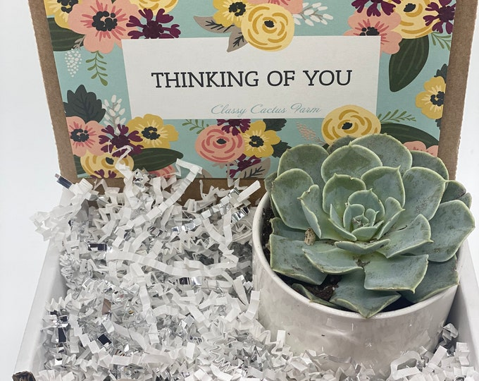 Thinking of You Succulent Box - 1 potted succulent