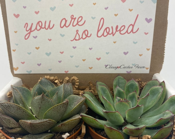 Succulent Gift Box - You are loved - 3 plants (2 inch plant)