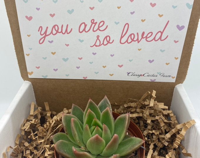 Succulent Gift Box - You are loved (3 inch plant)