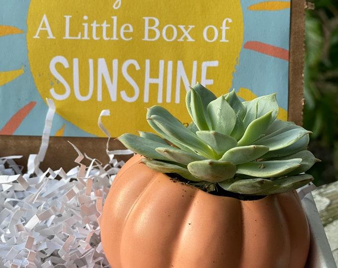 Fall Succulent Gift Box with Pumpkin planter