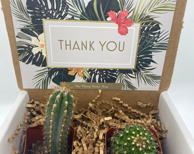 Cactus Gift Box - Thank You (set of 2)