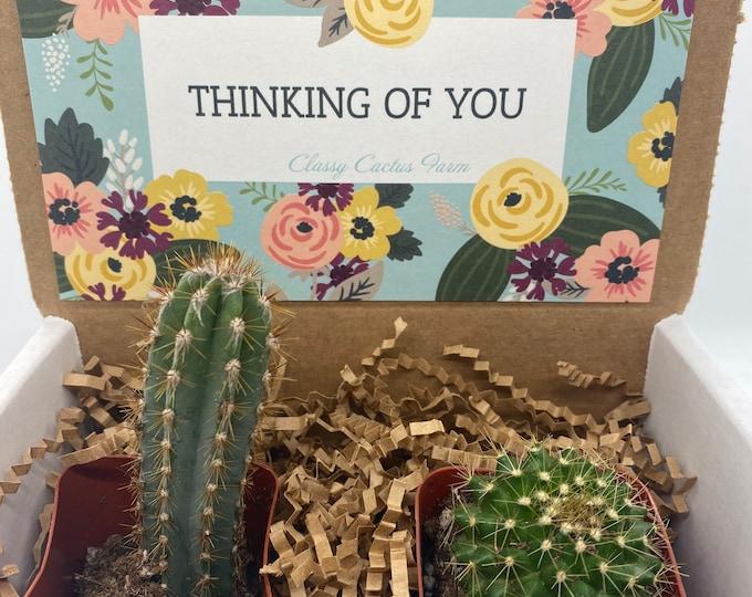 Cactus Gift Box - Thinking of You (set of 2)