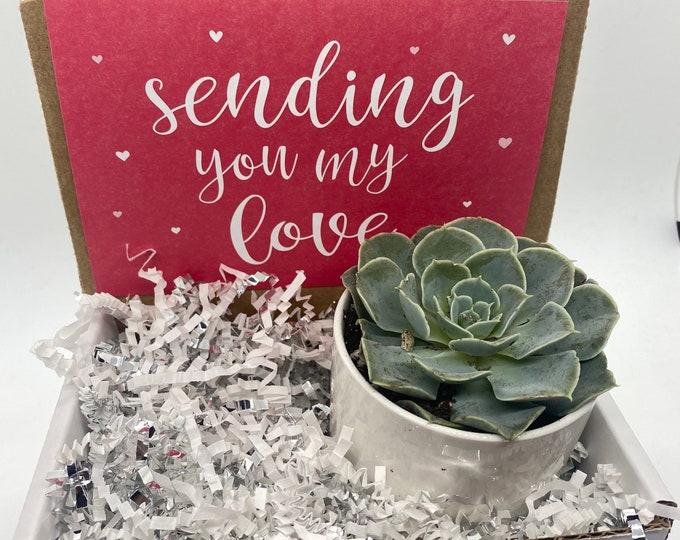 Valentine's Day Succulent Box Sending you my Love - 1 potted succulent
