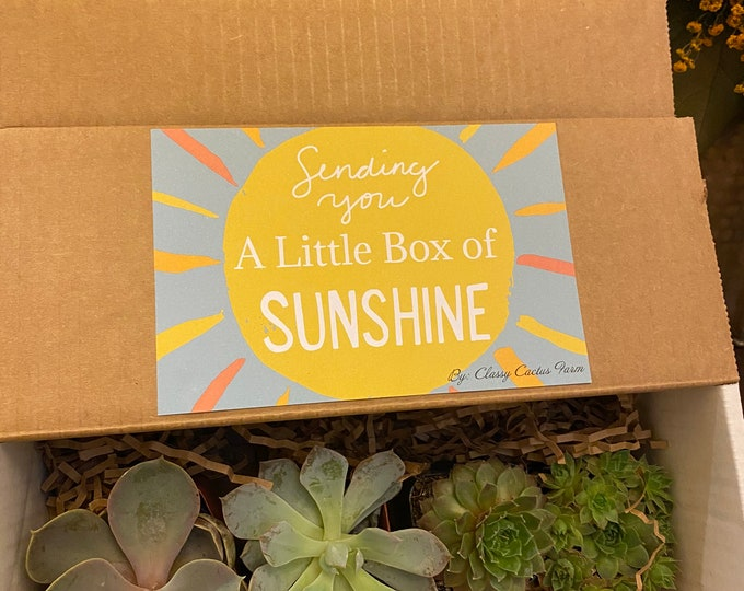 4 succulent gift box.