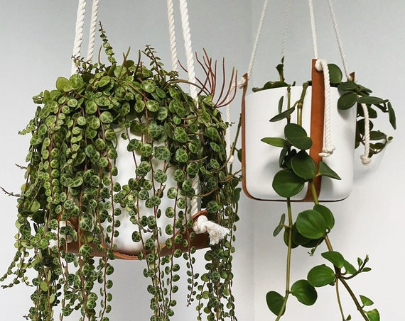 Leather Plant Hammock