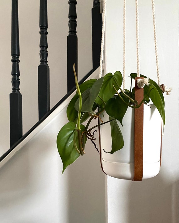Leather Plant Harness
