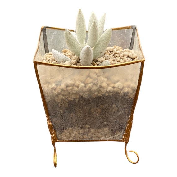 Organic Capiz Succulent Oyster Shell Planter with Drainage Holes, Translucent Decorative Candle Holder or Wedding Favor, Garden Home Decor