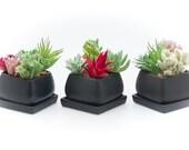 Succulent Pots, Small Ceramic Flower Planter Pot Containers, Cactus planter with Drainage Hole , set of 3 pcs