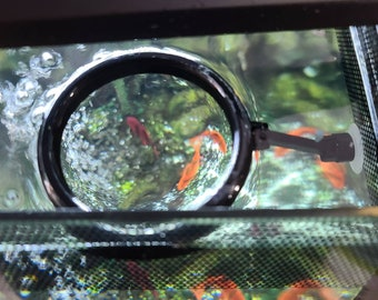 Floating Fish Feeder Ring with Suction Cup