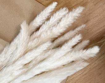 White beautiful flask-like pampas grass | Wedding, Decoration, Dry Flowers, Boho, Dried Flowers