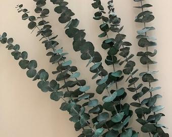 Baby Blue/Red Eucalyptus | Dried flowers, boho, wedding, pampas grass, dried flowers