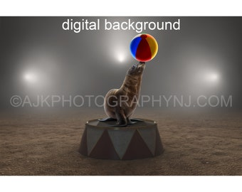 Circus digital background, seal lion balancing ball, digital backdrop