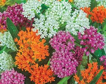 USA SELLER Milkweed Mix 25 seeds HEIRLOOM
