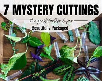 7 Assorted Clippings for Propagation - Variety of Cuttings (no repeats) - 7 Unrooted Cutting Mystery Box | I Ship Monday-Wednesday