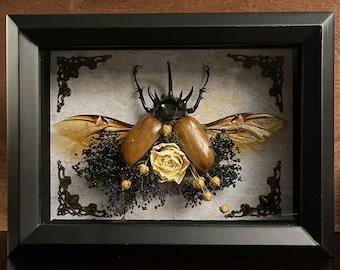 Handmade Floral Five Horned Rhinoceros Beetle Shadow Box