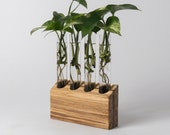 Propagation Station Wall - Handmade from Upcycled Chopsticks, Plant Cuttings Holder, Wood Block Four Glass Tubes Propagation Station Stand