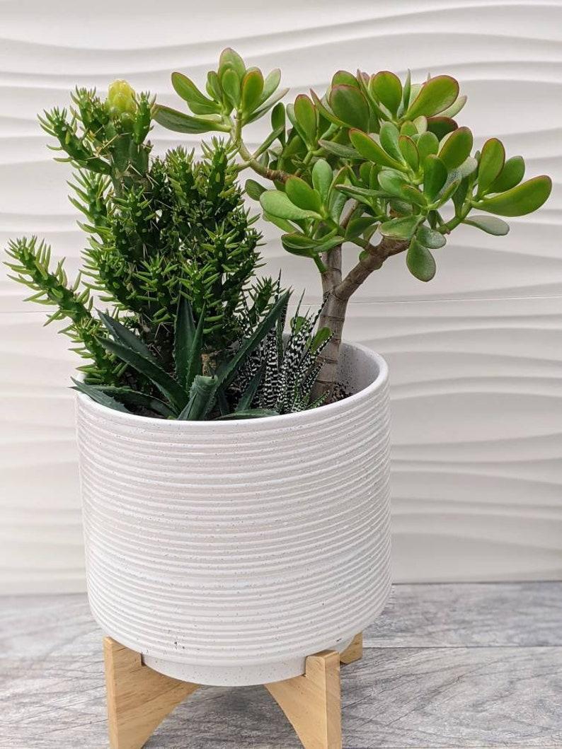 Modern White Pedestal Cactus Planter Local PU Only