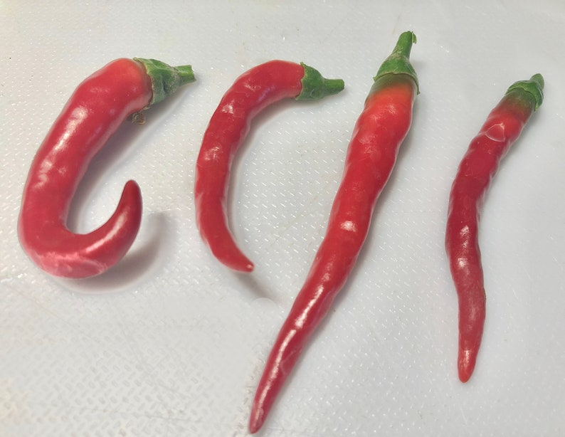 Famous Red Hot Chili Pepper Seeds Organic