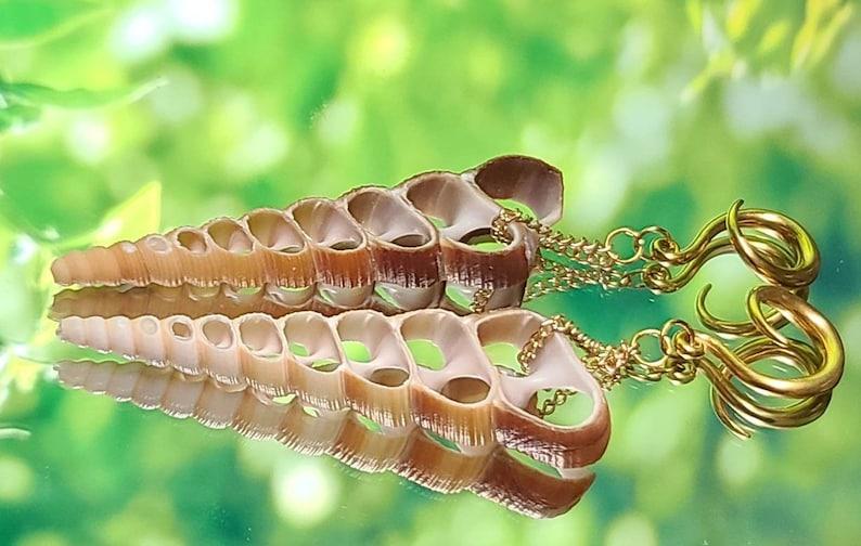 6g4mm Gold Terebra Turritella Shell Ear Hangers