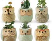 Set of 6 Small Ceramic Owl Succulent Plant Pot, Animal Plant Pot, Flower Planter Holder, Mini Cactus Planter Pots, Flower Pot Container