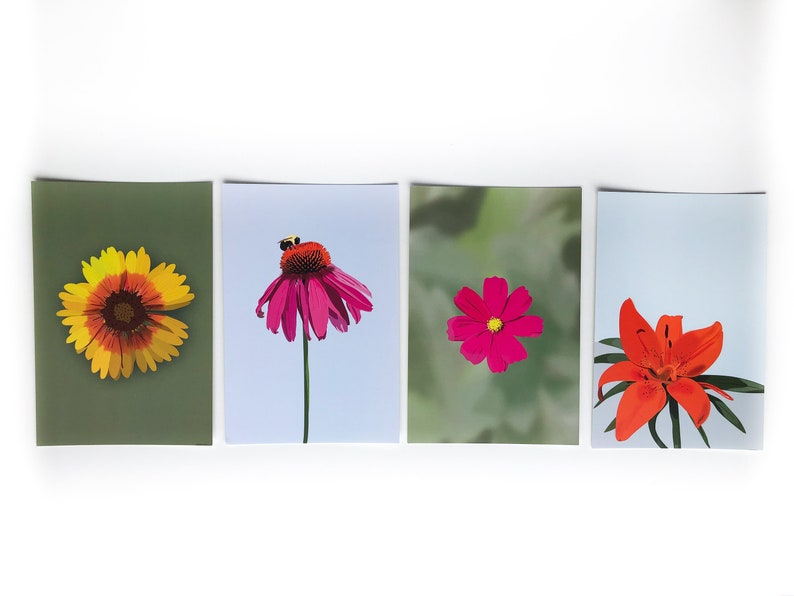 Illustrated Floral Cards Flower Postcard Set of 4 Echinacea, Lily, Firewheel, Cosmos