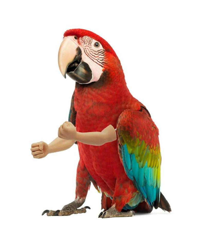 Bird Arms Large image 0