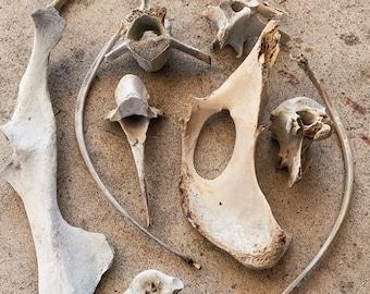 Bag o' Bones (Please read description)