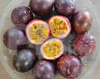 Purple Fresh Small Passion Fruit (Florida No.1) 2 Dozen (24 Counts)