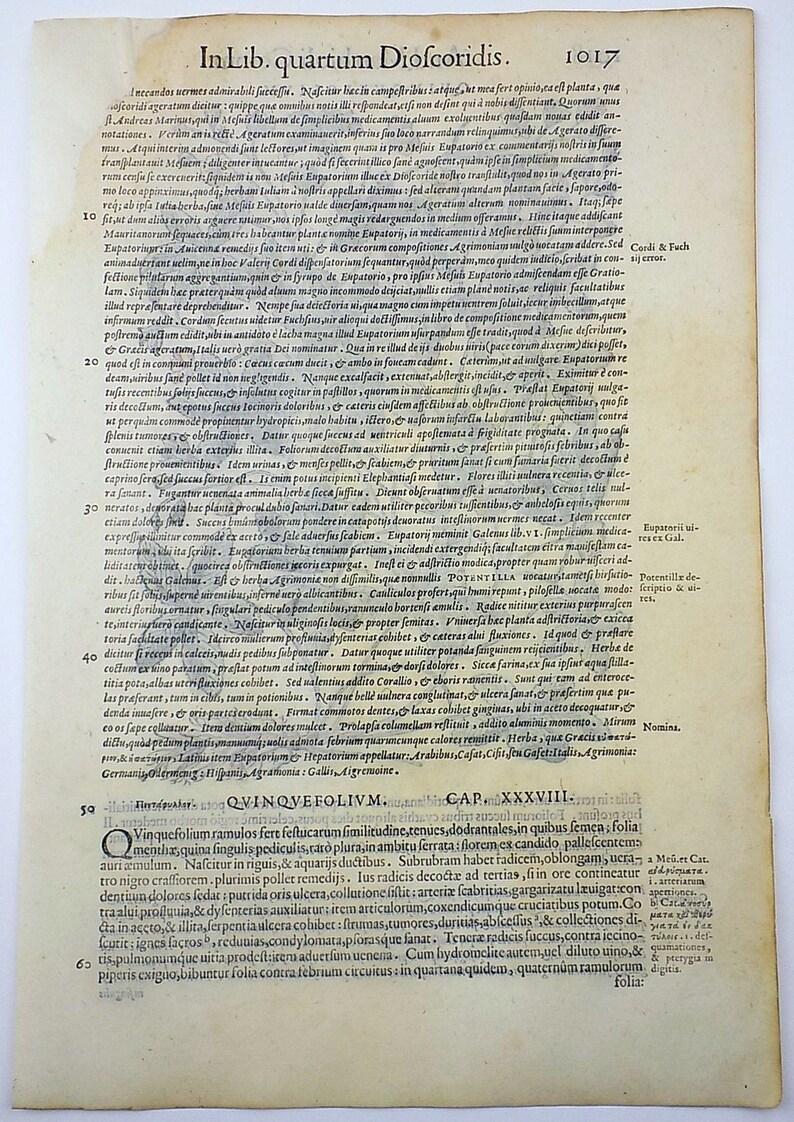 Liberale 1565 W Mayerpeck G Botany Folio Woodcut Cinquefoil Hand Colour