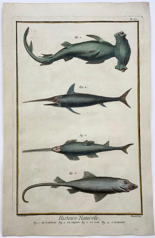 1780 Martinet SHARKS hand coloured large folio 38 cm engraving Fish