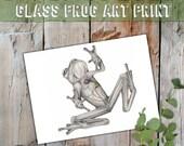 Glass Frog, See through Frog, Scientific Illustration, Art for Conservation, Frog Illustration, Frog Heart, Ecuadorian Animal Art, Rare Frog