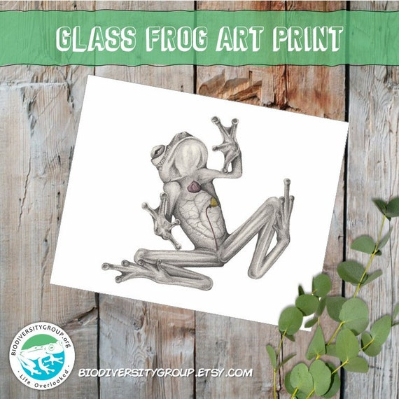 Glass Frog Art Print