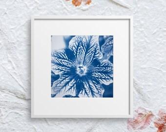 Floral 5x5 print, cyanotype print