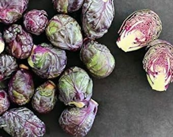RED RUBINE Brussels Sprouts Seeds, Heirloom Vegetable Seeds, Organic Seeds, Non GMO