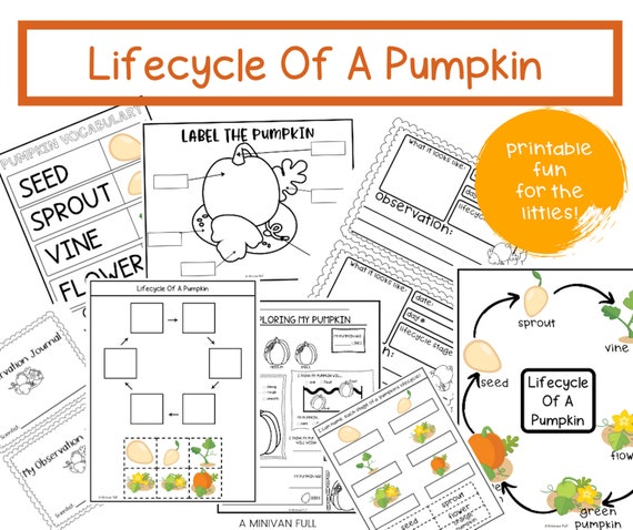 PRINTABLE LIFECYCLE of a PUMPKIN