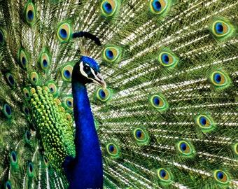 Pfauenfeder Kissenhülle Wildtier bunt pfau vogel Natur federn tier exotisch