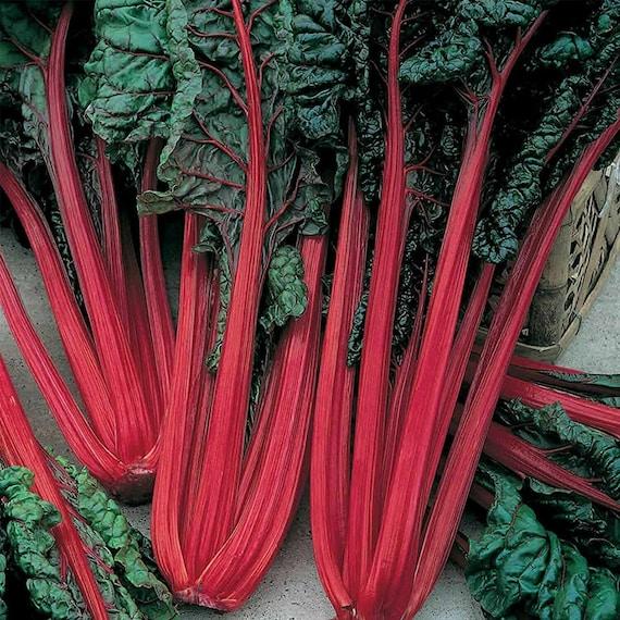 Seeds Chard Mangold Rainbow Mix Beetroot Rare Vegatable NON-GMO Organic Heirloom