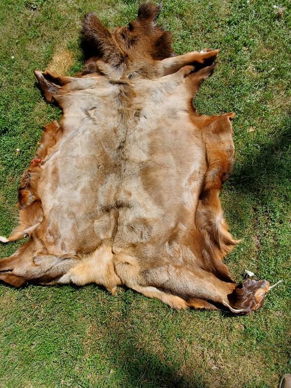 Bull elk hide tanned
