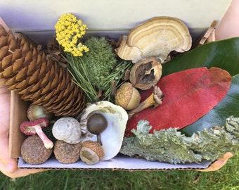 Kids Nature Kit, Nature Box, Kids Nature Box, Nature Loose Parts, Loose Parts, Pinecones, Nature Study, Nature Play, Nature Treasures, Kids