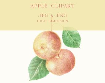 Apple Fruit Clipart, Apple png, Apple Clipart jpg, Poster for Kitchen, Digital Poster Apple, Printable jpg, Transparent Background Apple