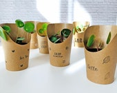 Baby Pilea Plant in Plant Cup as a Gift or Little Attention real plant Pot with Greeting Personalizable