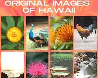 Travel Stock Photos | COMMERCIAL USE | Stock Photos of Hawaii