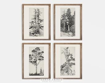 Vintage Gallery Wall Print Set | Tree Sketches Etching Print | Digital PRINTABLE #S4-5