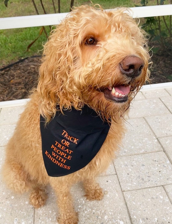 You\u2019re So Golden Dog Bandana Harry Styles Pet Accessory