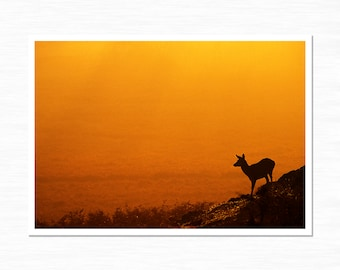 Red Deer Photography Print