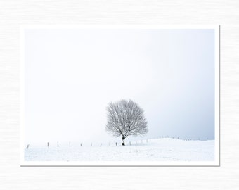 Lone Tree in Snow, Dilhorne, Staffordshire, Photography Print